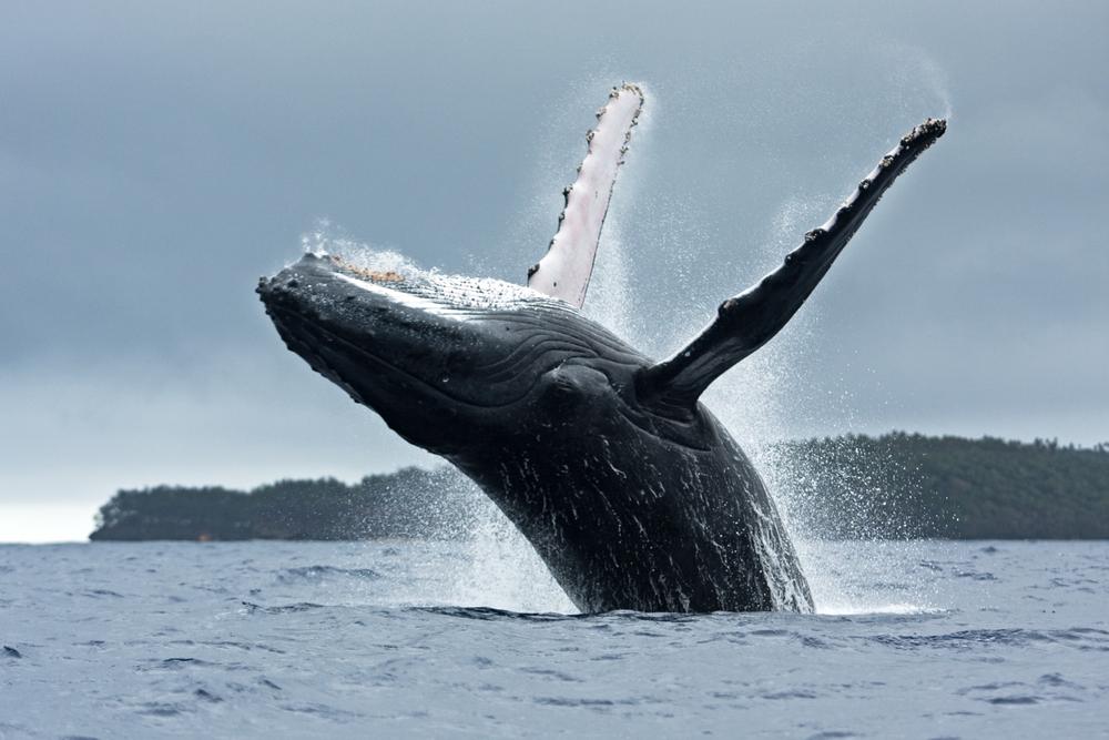 В Австралии кит ранил женщину во время сноркелинга.Вокруг Света. Украина