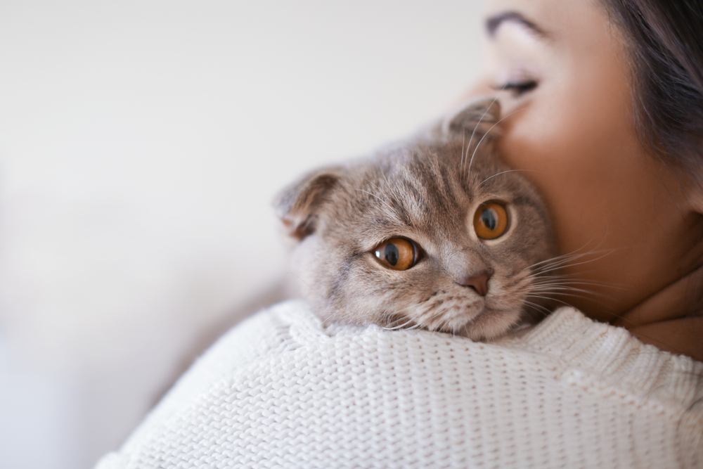 Международный День кошек: интересные факты и коты-блогеры
