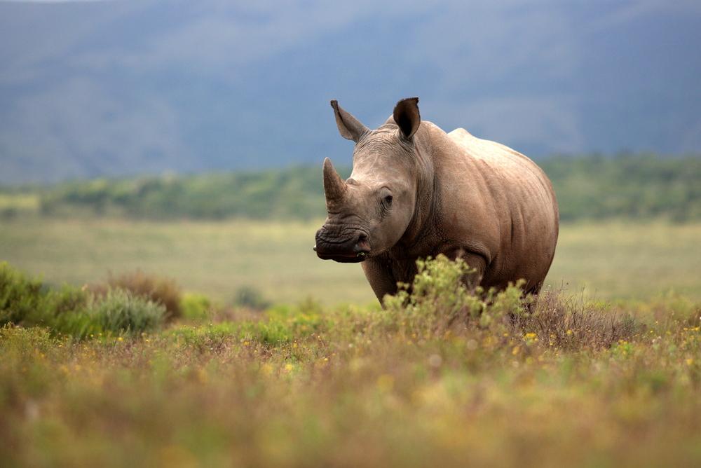 Травоядные животные могут исчезнуть первыми – исследование.Вокруг Света. Украина