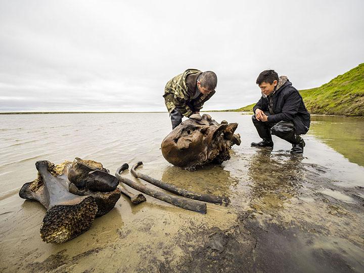 Останки 10000-летнего мамонта вытащили из сибирского озера