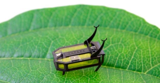 Инженеры создали робота - жука, работающего на алкоголе.Вокруг Света. Украина