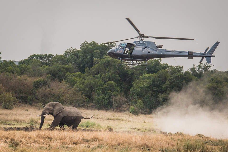 В Кении спасли раненого копьем слона