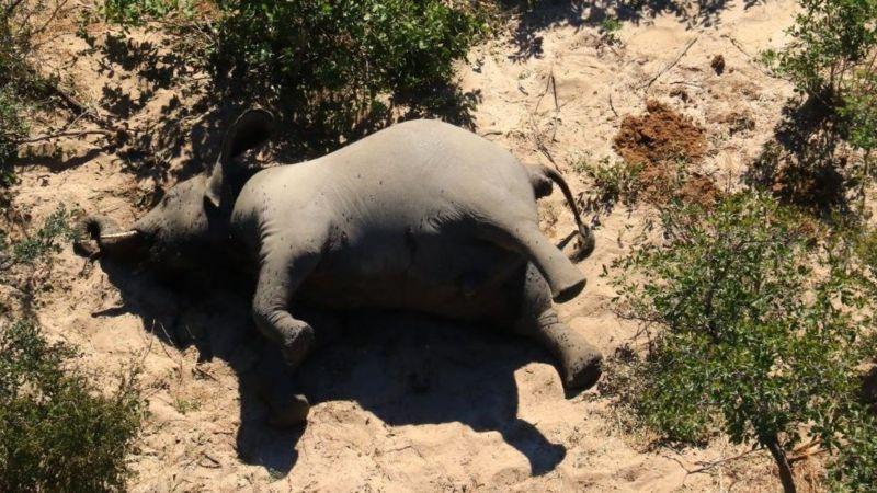 гибель слонов в ботсване