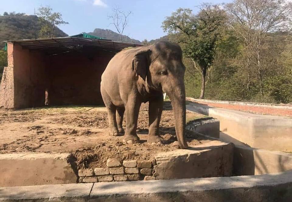Самому одинокому слону в мире нашли новый дом.Вокруг Света. Украина
