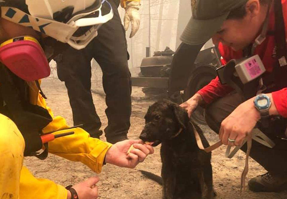 В Калифорнии щенок выжил под руинами сгоревшего дома.Вокруг Света. Украина