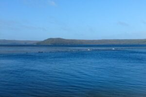 250 китов застряли на песчаной косе в австралийской гавани