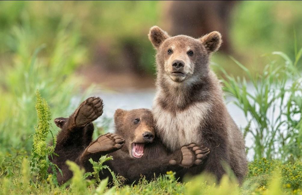Конкурс самых смешных снимков дикой природы-2020 назвал финалистов.Вокруг Света. Украина