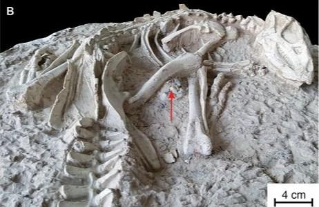В вулканической лаве нашли неизвестных науке динозавров
