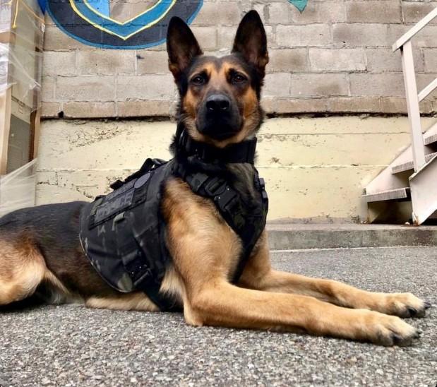 В США мальчик собрал более 300 тысяч долларов на бронежилеты для собак