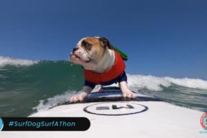 В США прошел конкурс собак-серфингистов