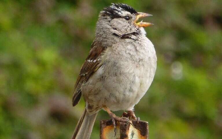 Птицы стали петь красивее благодаря карантину.Вокруг Света. Украина