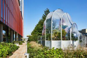 В Лондоне установили теплицу с тропическими растениями: из-за изменения климата они скоро смогут расти на открытом воздухе