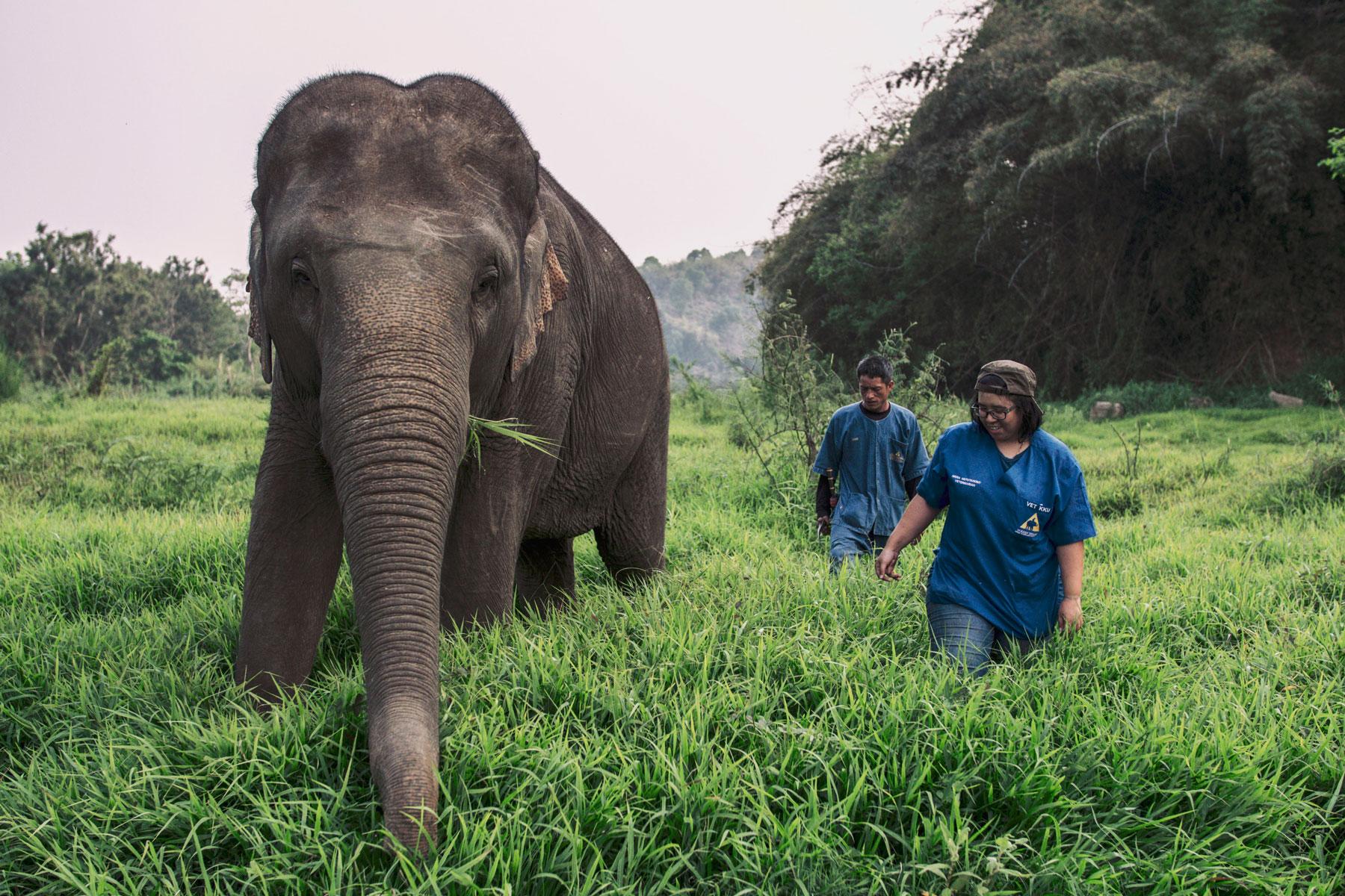 Тайский курорт устаивает встречи в Zoom со слонами
