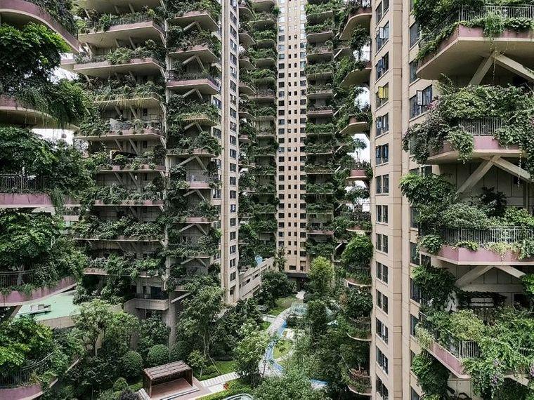 В китайском квартале-джунглях отказались жить люди