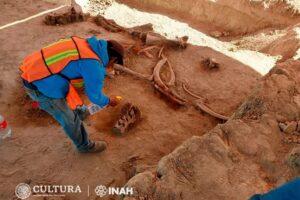 В Мексике на месте строительства аэропорта нашли 200 скелетов мамонтов