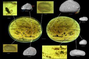 В янтаре из Мьянмы обнаружили древнейшую сперму животного