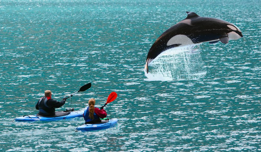 Испания запретила яхтинг из-за нападений китов-убийц