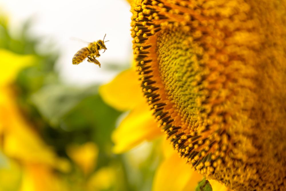 Пчел можно дрессировать.Вокруг Света. Украина