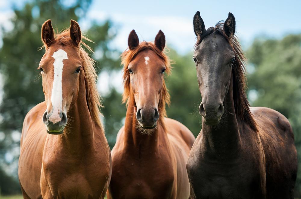 Во Франции арестован подозреваемый в массовом убийстве лошадей.Вокруг Света. Украина