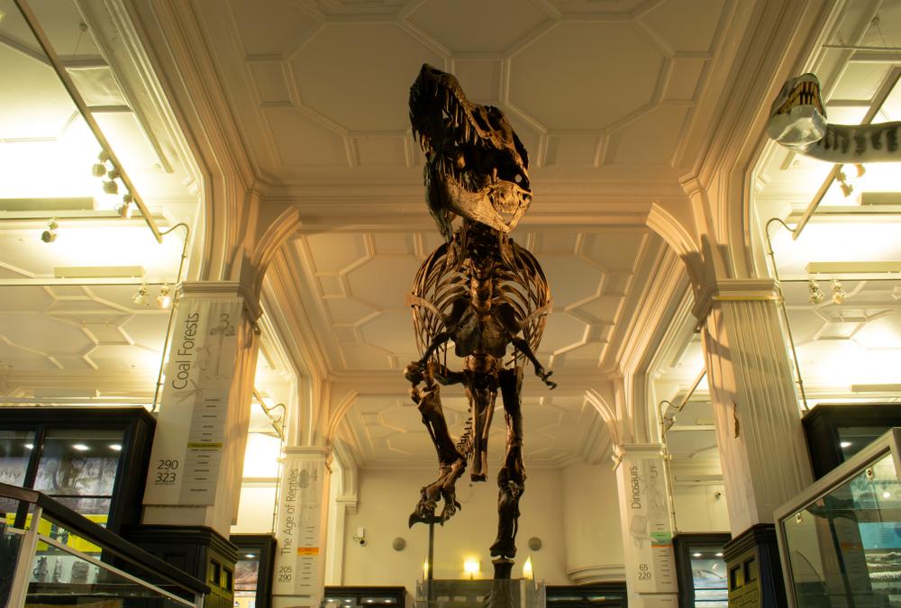 На аукцион выставили самый известный скелет тираннозавра