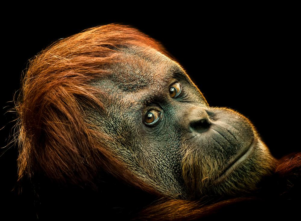 Звіт WWF: популяції диких тварин скоротилисяна дві третини з 1970 року