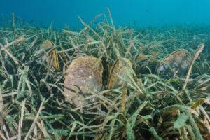 Из-за глобального потепления моллюски попали в лифт смерти