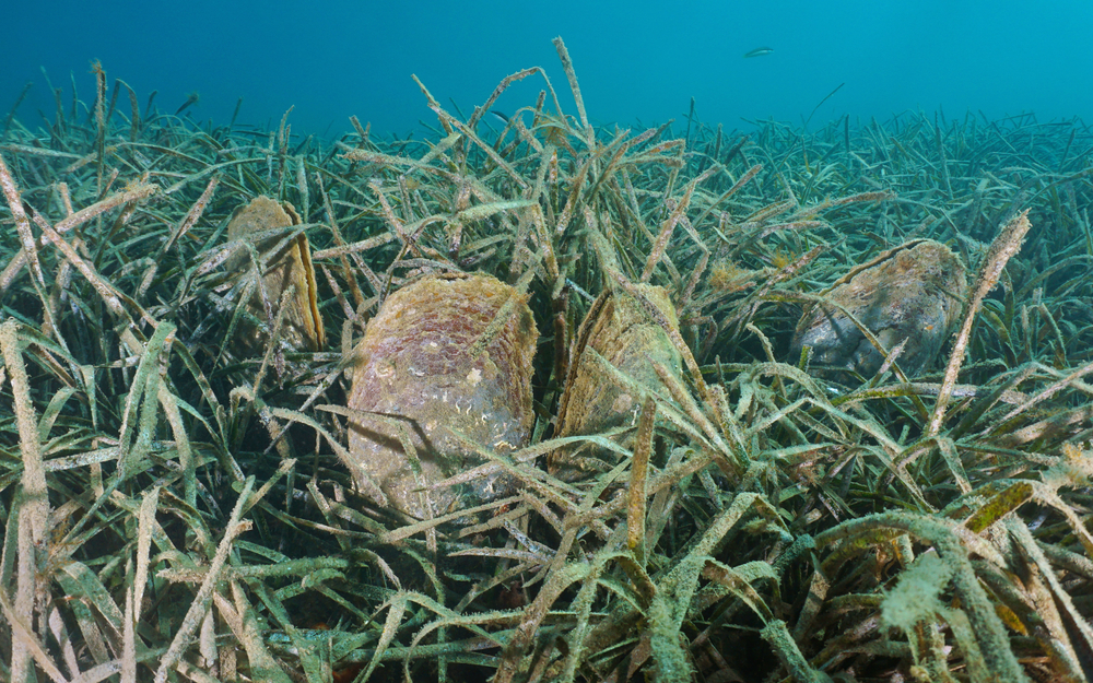 Из-за глобального потепления моллюски попали в лифт смерти.Вокруг Света. Украина