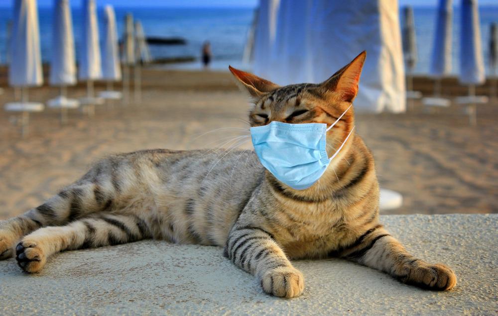 Турция усилила карантин: теперь маски нужны даже на пляжах