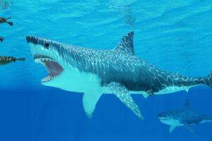 Палеонтологи назвали точные размеры акулы-мегалодона