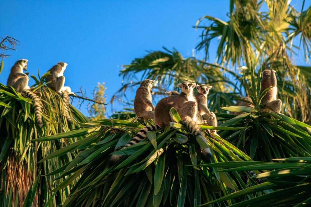 Мадагаскар: что нужно знать, отправляясь на остров