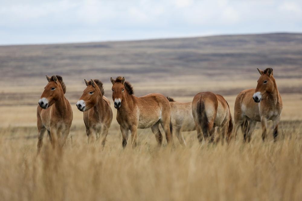 За последние 30 лет удалось спасти от вымирания 28 видов животных.Вокруг Света. Украина