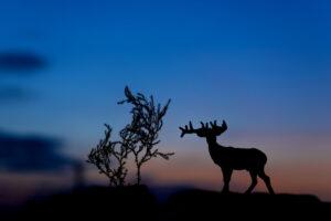 На Харьковщине браконьеры убили последнего лося