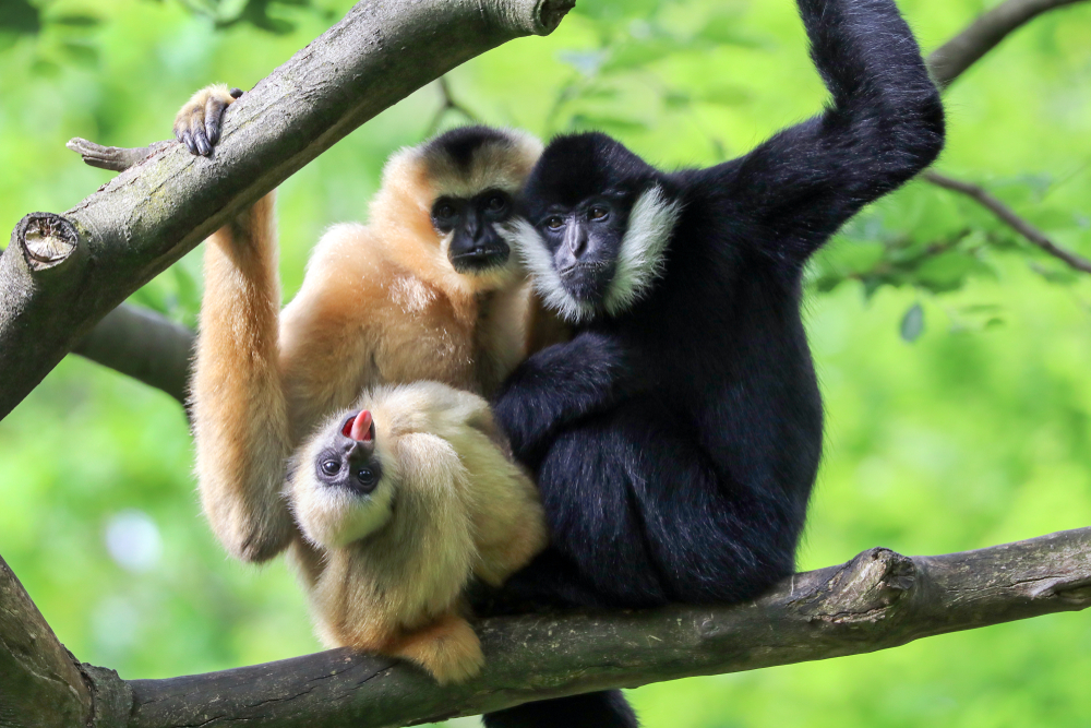 Найден новый вид древних приматов.Вокруг Света. Украина