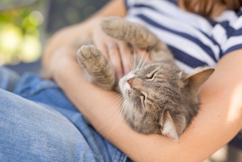 Почему коты мурлычут?.Вокруг Света. Украина