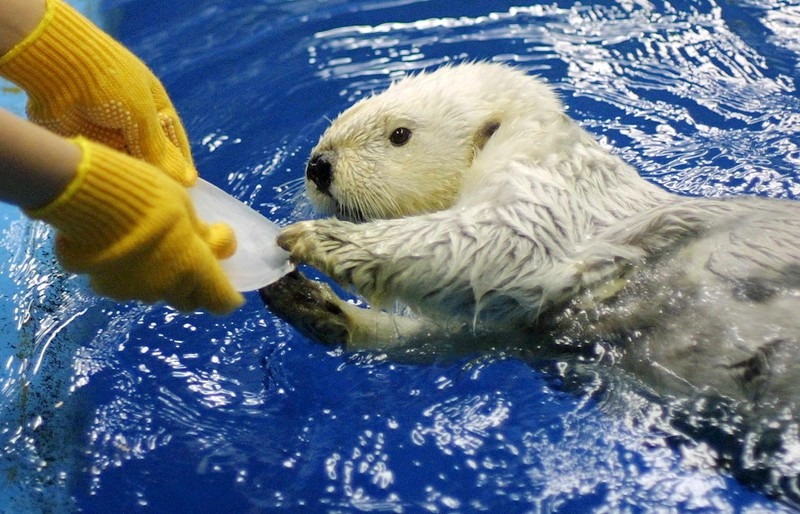 Во Франции запретили  диких животных в шапито, океанариумах и на фермах.Вокруг Света. Украина