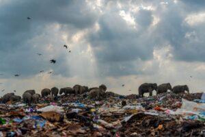 Слоны на свалке: в Великобритании назвали фото года
