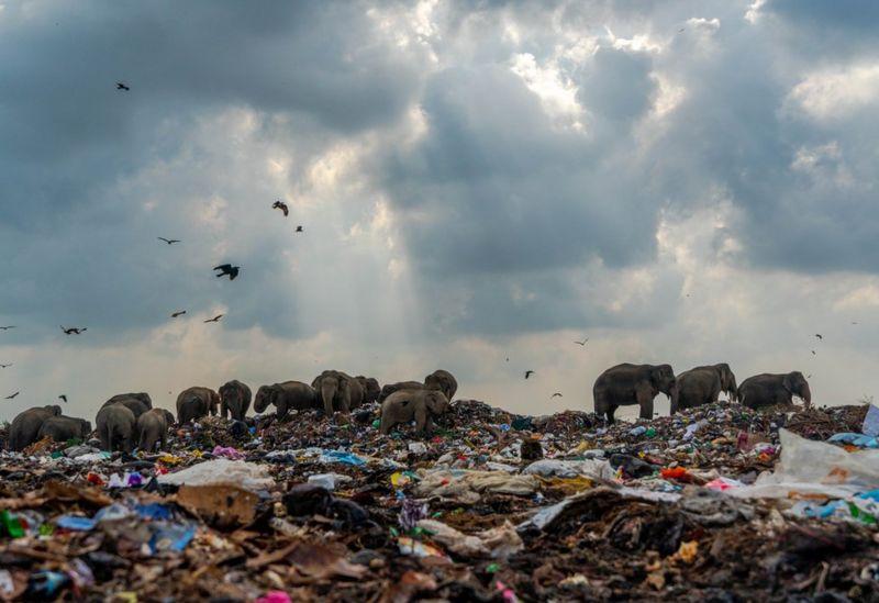 Слоны на свалке: в Великобритании назвали фото года.Вокруг Света. Украина