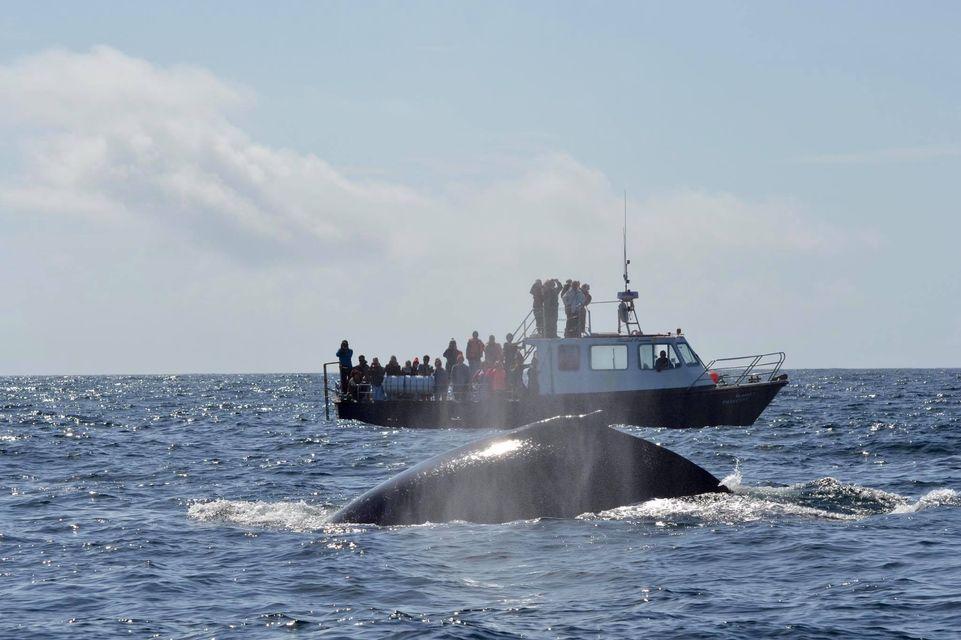 В Ирландии пропал легендарный дельфин, которого обожали туристы