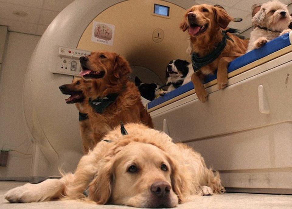 Мозг собаки не отличает лицо от затылка человека