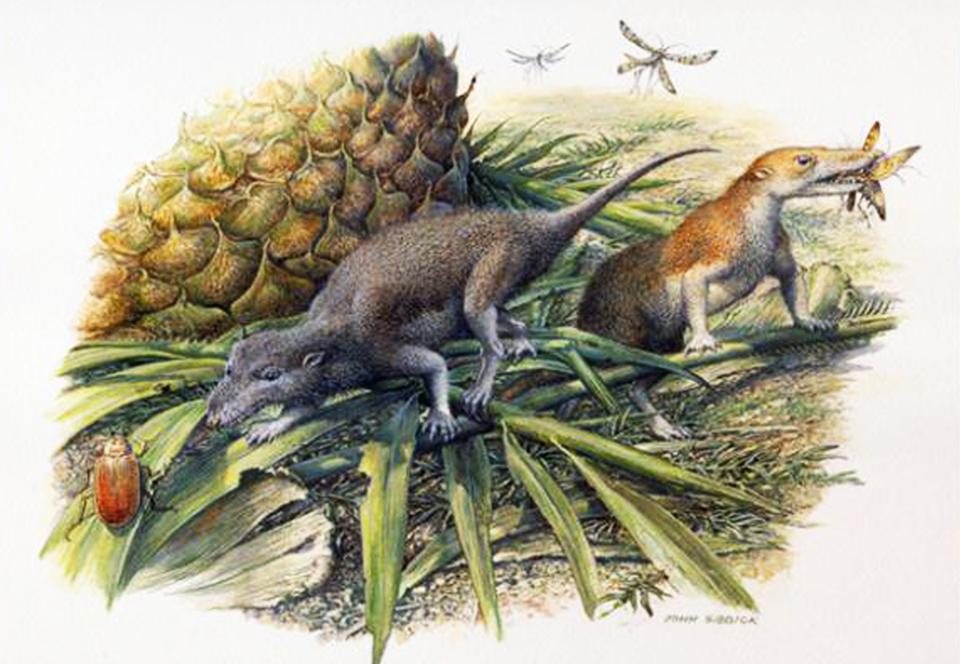 Первые млекопитающие жили дольше, потому что не спешили.Вокруг Света. Украина