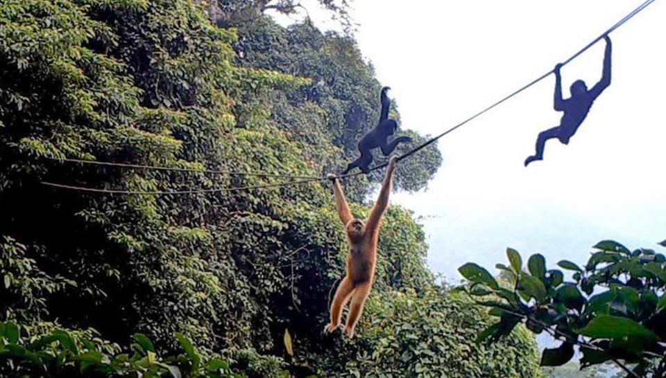 В Китае появился мост для спасения редчайших приматов.Вокруг Света. Украина