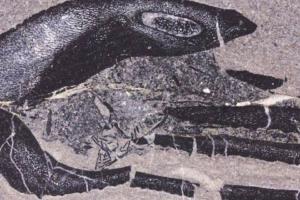 В Шотландии найдены окаменелости самых древних детенышей Земли
