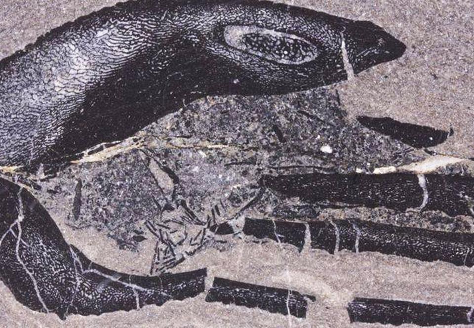 В Шотландии найдены окаменелости самых древних детенышей Земли.Вокруг Света. Украина