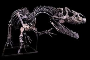 В Париже скелет аллозавра ушел с молотка за $3,5 млн