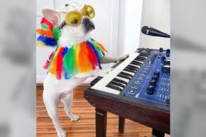 Техасский пес нарядился к Хэллоуину и стал звездой интернета