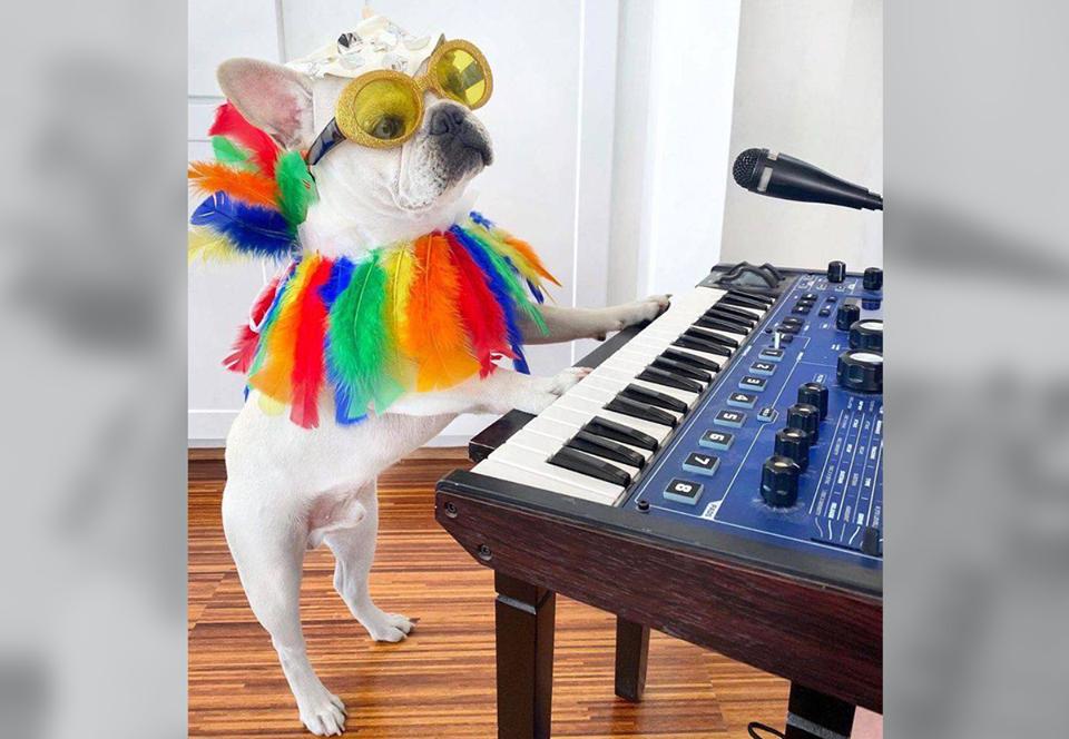 Техасский пес нарядился к Хэллоуину и стал звездой интернета.Вокруг Света. Украина