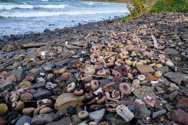 Следствие назвало причину экокатастрофы на Камчатке