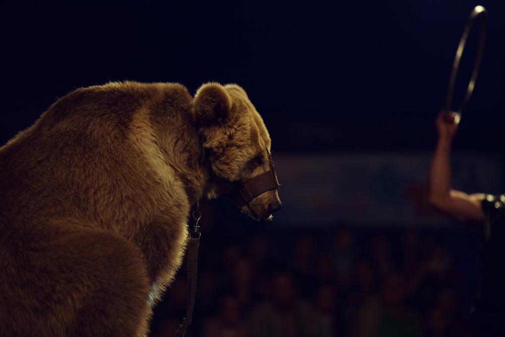 В Китае медведь напал на артиста во время шоу