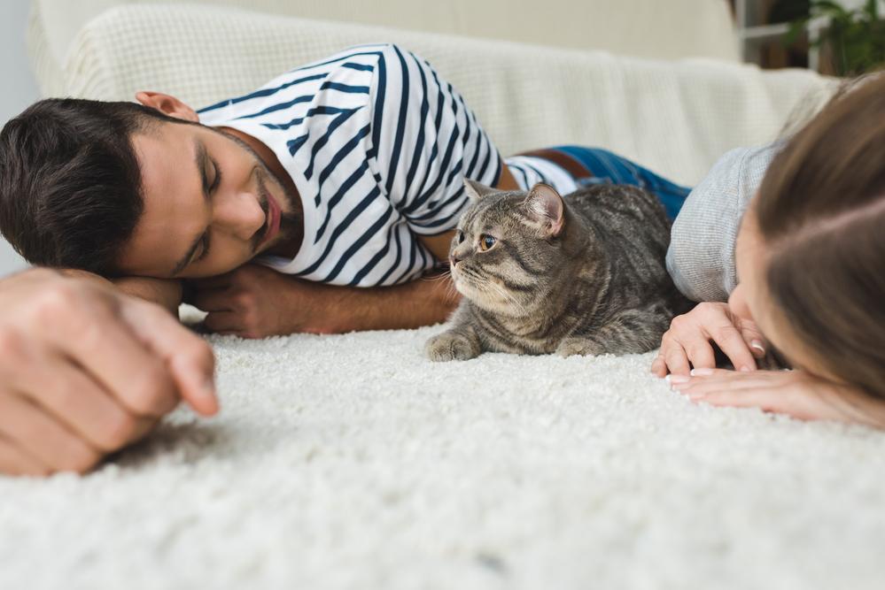 Психологи рассказали, как подружиться с кошкой.Вокруг Света. Украина