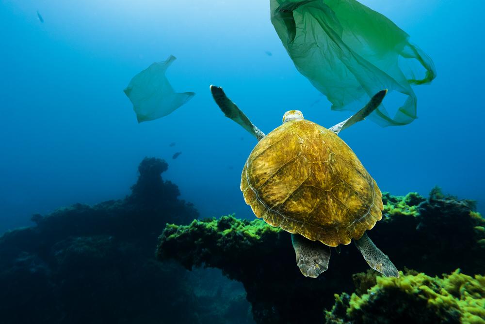 На дне океана в десятки раз больше пластика, чем на поверхности